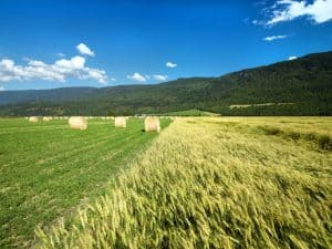 Canadian Agriculture Industry Provides 1 in 8 Jobs