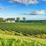 Coronavirus: Canada's Farms Face Labour Shortage Despite TFWs Being Allowed To Travel